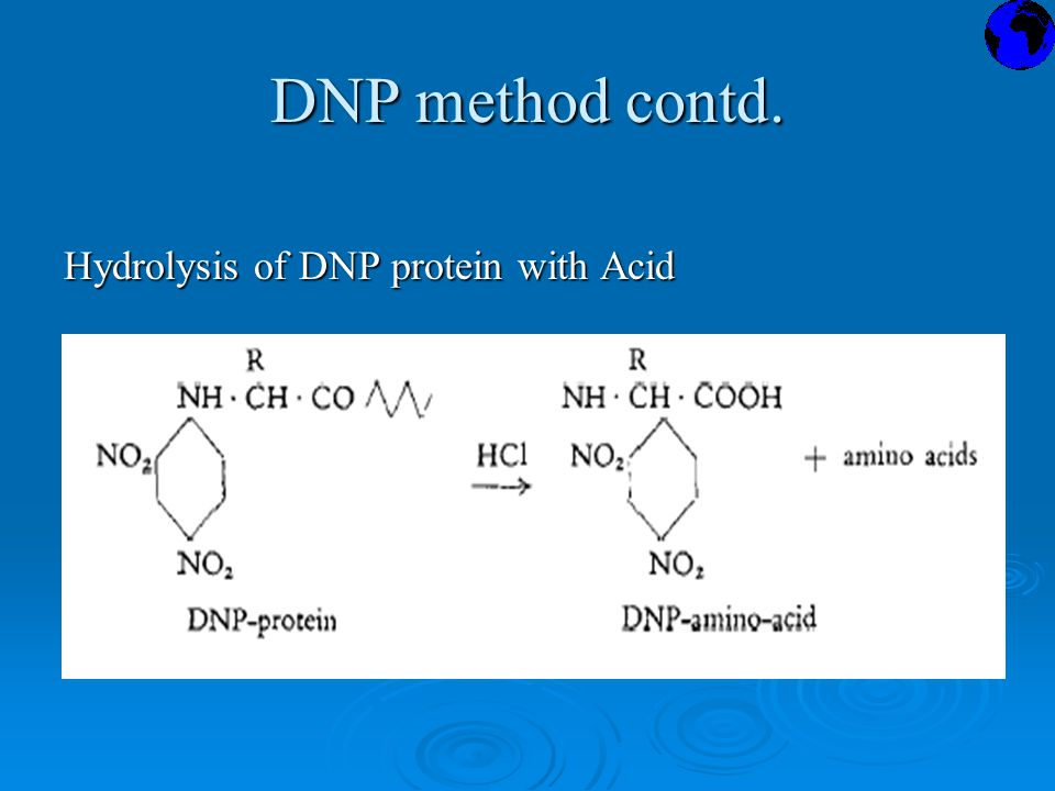 DNP method contd. Hydrolysis of DNP protein with Acid