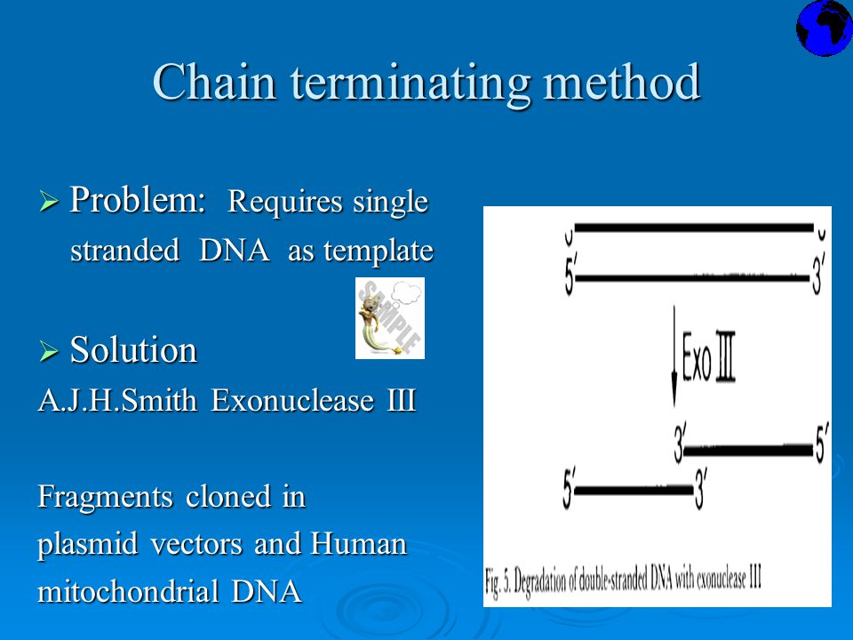 Chain terminating method  Problem: Requires single stranded DNA as template stranded DNA as template  Solution A.J.H.Smith Exonuclease III Fragments cloned in plasmid vectors and Human mitochondrial DNA