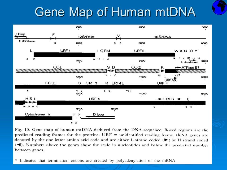 Gene Map of Human mtDNA