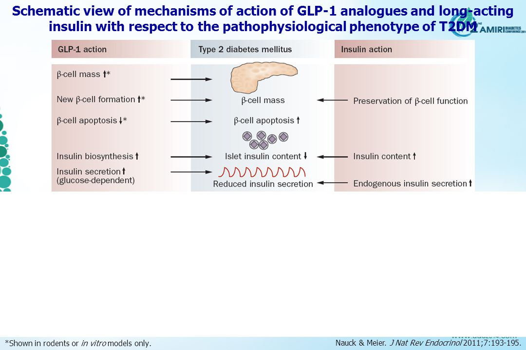 Schematic view of mechanisms of action of GLP ‑ 1 analogues and long-acting insulin with respect to the pathophysiological phenotype of T2DM *Shown in rodents or in vitro models only.
