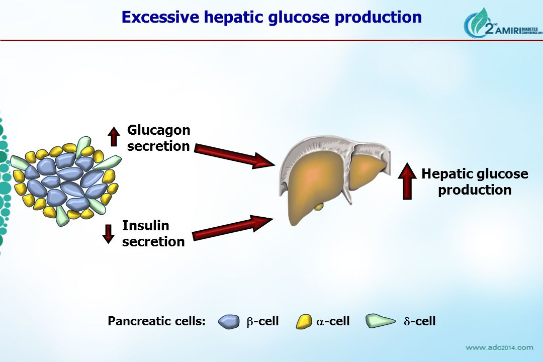 Glucagon secretion Pancreatic cells:  -cell  -cell  -cell Hepatic glucose production Insulin secretion Excessive hepatic glucose production