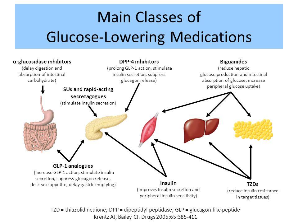 Main Classes of Glucose-Lowering Medications TZD = thiazolidinedione; DPP = dipeptidyl peptidase; GLP = glucagon-like peptide Krentz AJ, Bailey CJ. Dr