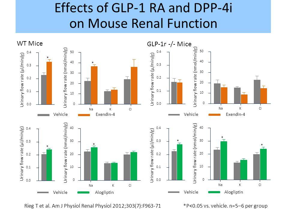 Rieg T et al. Am J Physiol Renal Physiol 2012;303(7):F963-71*P<0.05 vs. vehicle. n=5–6 per group 0.0 0.1 0.2 0.3 0.4 WT Mice Urinary flow rate (µl/min