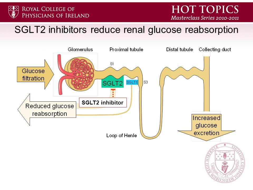 SGLT2 inhibitors reduce renal glucose reabsorption SGLT2 inhibitor