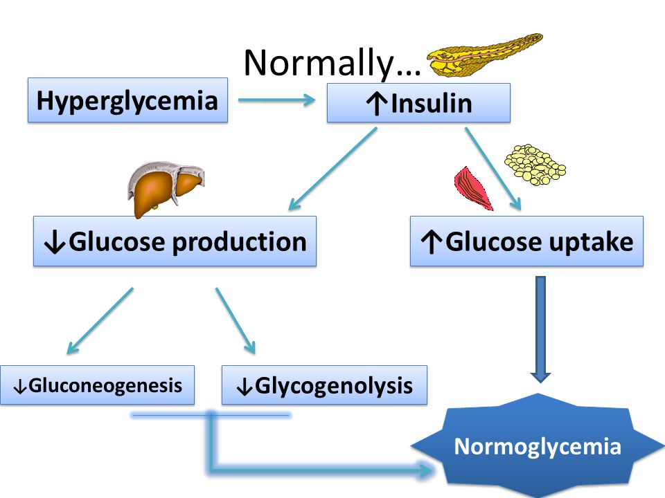 Normally… Hyperglycemia ↑Insulin ↑Glucose uptake ↓Glucose production ↓ Gluconeogenesis ↓ Glycogenolysis Normoglycemia