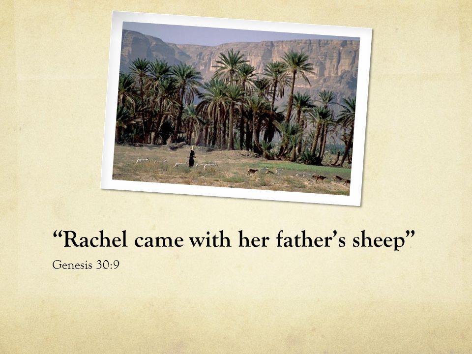 Rachel came with her father's sheep Genesis 30:9