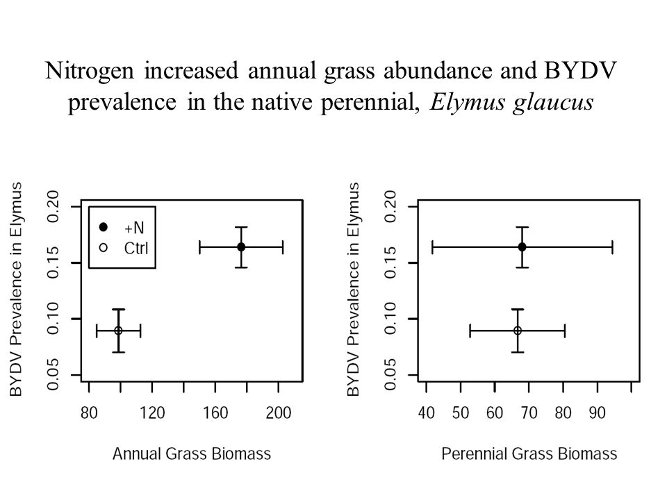 Nitrogen increased annual grass abundance and BYDV prevalence in the native perennial, Elymus glaucus