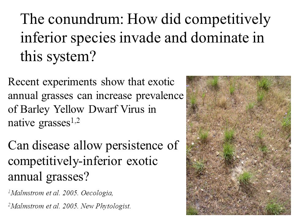 The conundrum: How did competitively inferior species invade and dominate in this system.