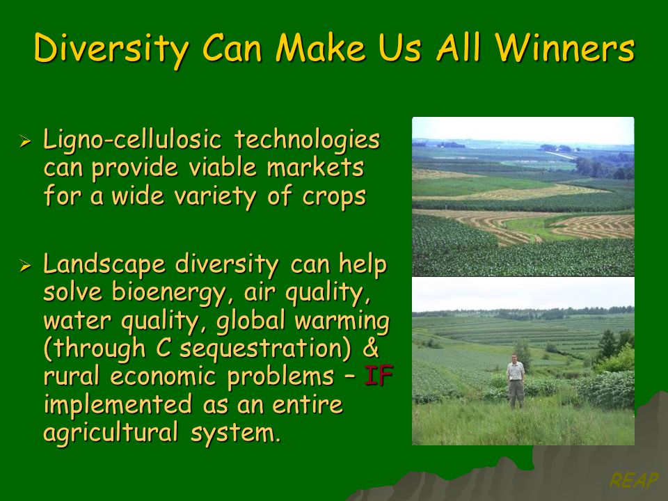 Diversity Can Make Us All Winners  Ligno-cellulosic technologies can provide viable markets for a wide variety of crops  Landscape diversity can help solve bioenergy, air quality, water quality, global warming (through C sequestration) & rural economic problems – IF implemented as an entire agricultural system.