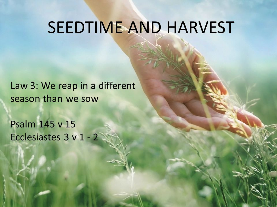Law 3: We reap in a different season than we sow Psalm 145 v 15 Ecclesiastes 3 v 1 - 2 SEEDTIME AND HARVEST