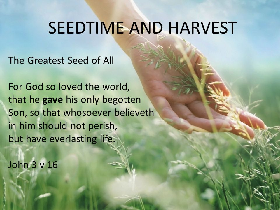 The Greatest Seed of All For God so loved the world, that he gave his only begotten Son, so that whosoever believeth in him should not perish, but hav