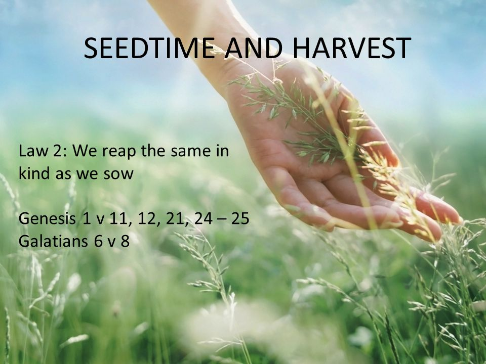 Law 2: We reap the same in kind as we sow Genesis 1 v 11, 12, 21, 24 – 25 Galatians 6 v 8 SEEDTIME AND HARVEST
