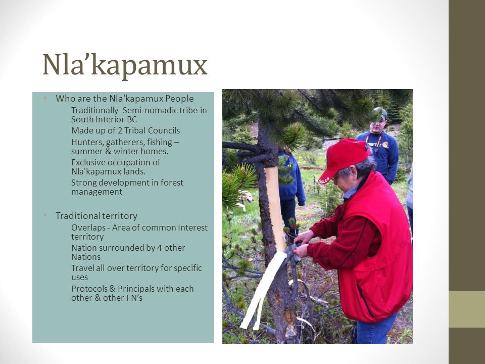 Nla'kapamux Who are the Nla kapamux People Traditionally Semi-nomadic tribe in South Interior BC Made up of 2 Tribal Councils Hunters, gatherers, fishing – summer & winter homes.