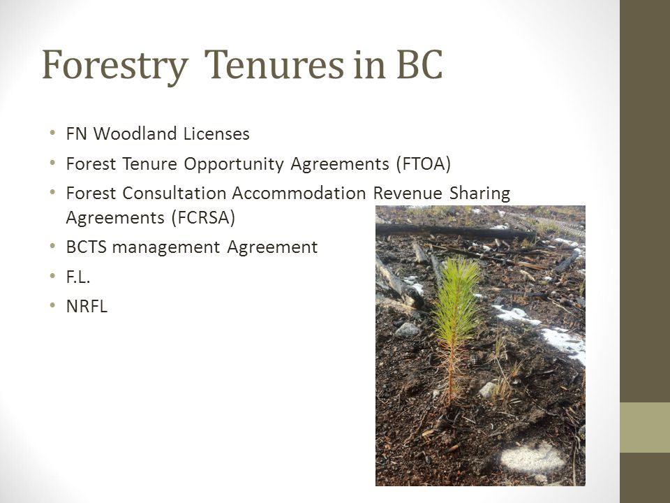 Forestry Tenures in BC FN Woodland Licenses Forest Tenure Opportunity Agreements (FTOA) Forest Consultation Accommodation Revenue Sharing Agreements (FCRSA) BCTS management Agreement F.L.