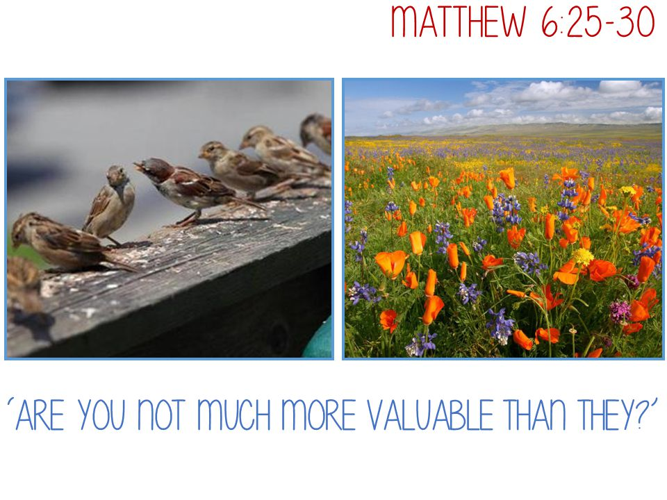 'Are you not much more valuable than they?' Matthew 6:25-30