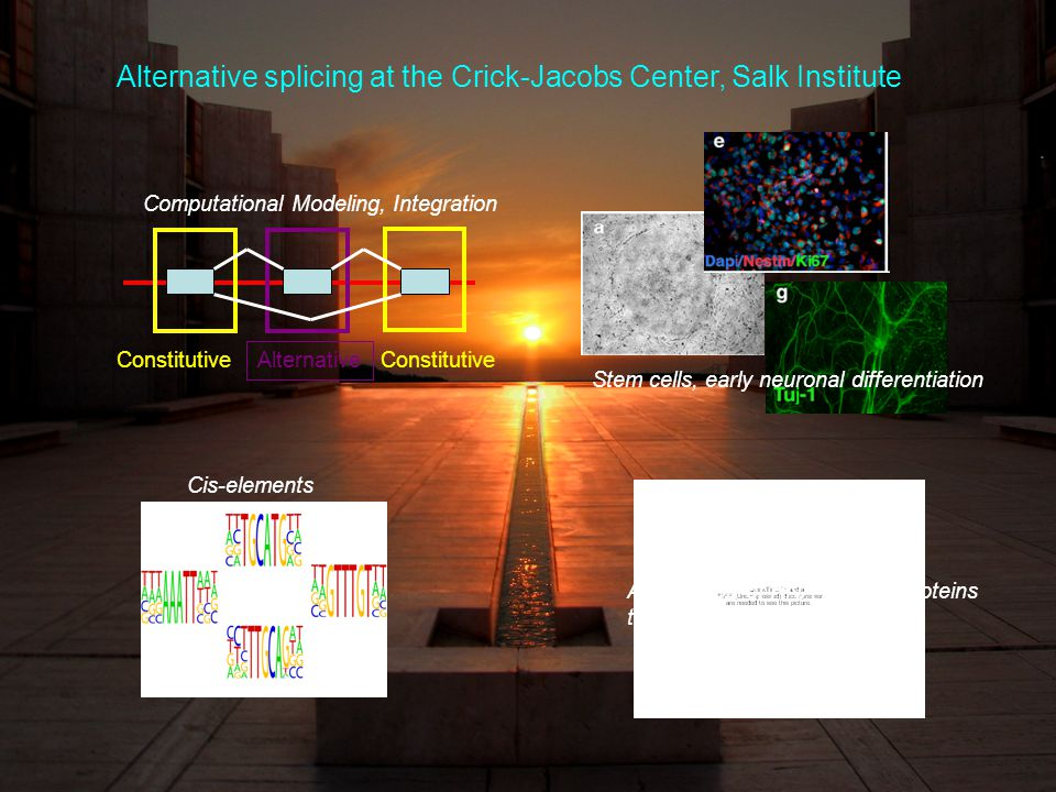 Alternative Constitutive Computational Modeling, Integration Cis-elements Association of RNA binding proteins to elements Stem cells, early neuronal differentiation Alternative splicing at the Crick-Jacobs Center, Salk Institute