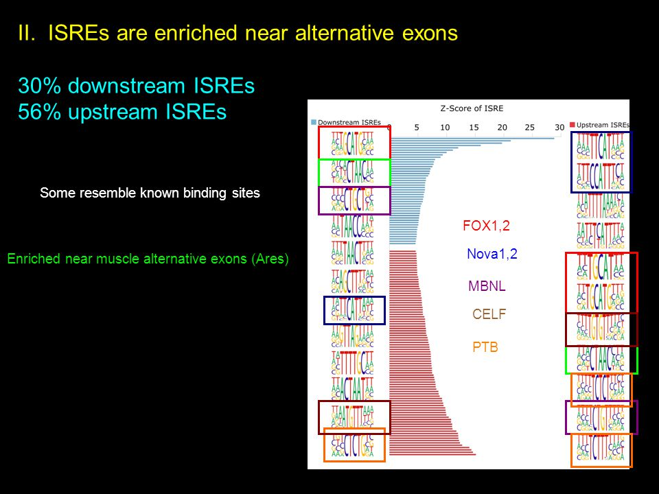 II. ISREs are enriched near alternative exons 30% downstream ISREs 56% upstream ISREs Some resemble known binding sites FOX1,2Enriched near muscle alt