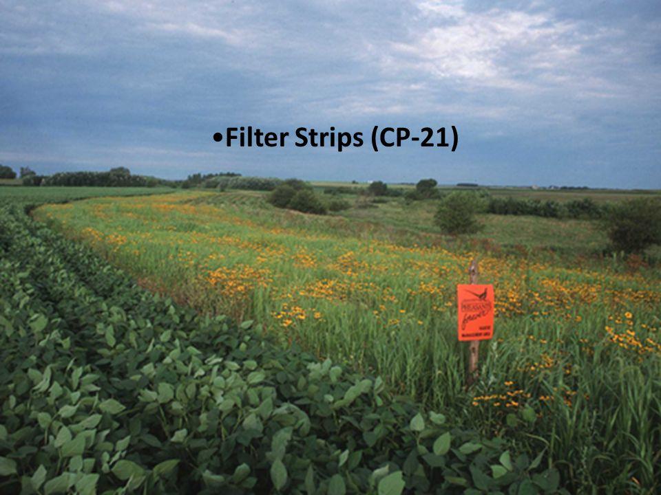 Filter Strips (CP-21)