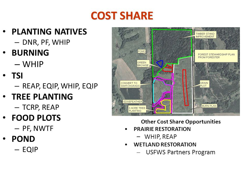 COST SHARE PLANTING NATIVES – DNR, PF, WHIP BURNING – WHIP TSI – REAP, EQIP, WHIP, EQIP TREE PLANTING – TCRP, REAP FOOD PLOTS – PF, NWTF POND – EQIP O