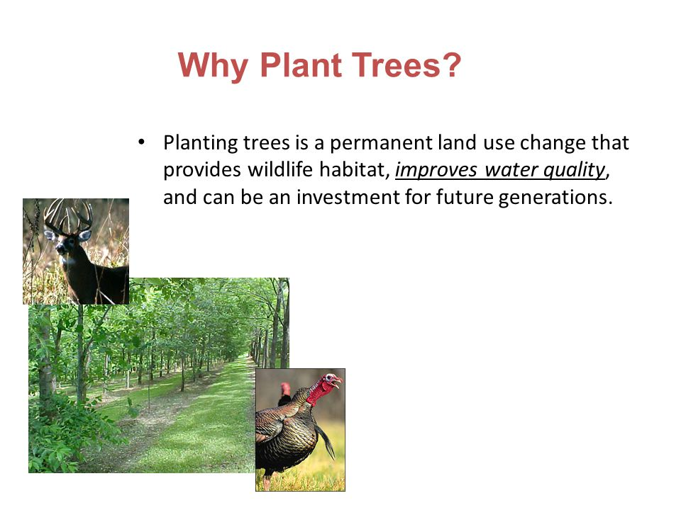 Why Plant Trees? Planting trees is a permanent land use change that provides wildlife habitat, improves water quality, and can be an investment for fu