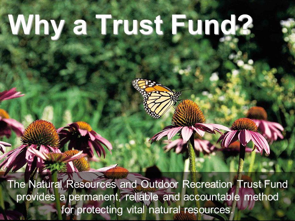 Why a Trust Fund.