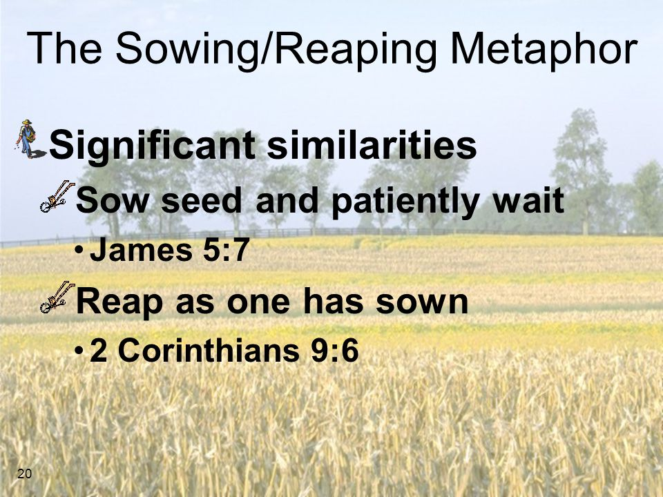 20 The Sowing/Reaping Metaphor Significant similarities Sow seed and patiently wait James 5:7 Reap as one has sown 2 Corinthians 9:6