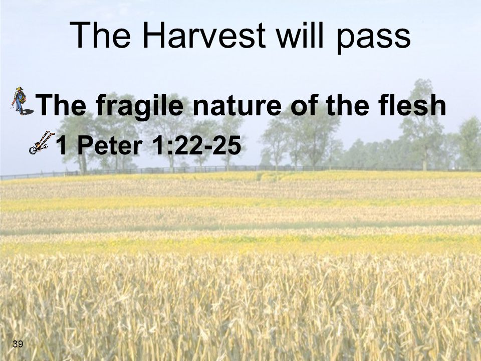 39 The Harvest will pass The fragile nature of the flesh 1 Peter 1:22-25