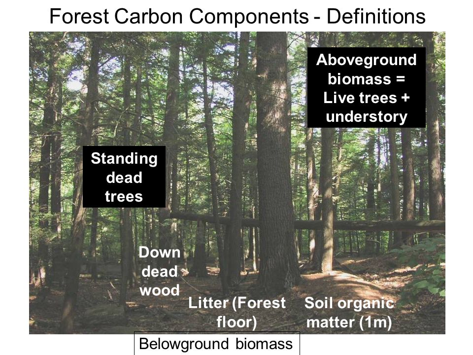 Forest Carbon Components - Definitions Down dead wood Aboveground biomass = Live trees + understory Standing dead trees Soil organic matter (1m) Litter (Forest floor) Belowground biomass