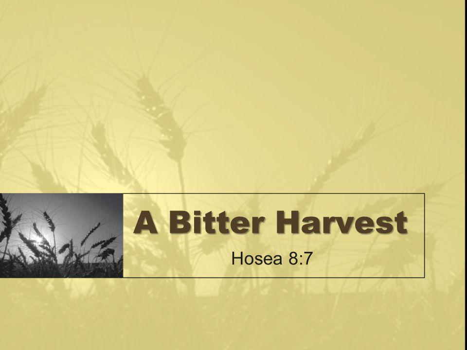 A Bitter Harvest Hosea 8:7