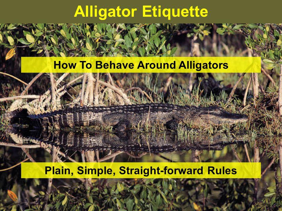 Alligator Etiquette – Rule 3 Do Not Assume Alligators Are Slow-moving or Sluggish.