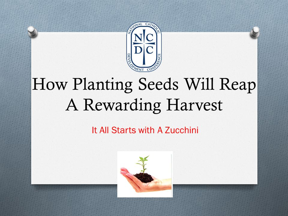 How Planting Seeds Will Reap A Rewarding Harvest It All Starts with A Zucchini