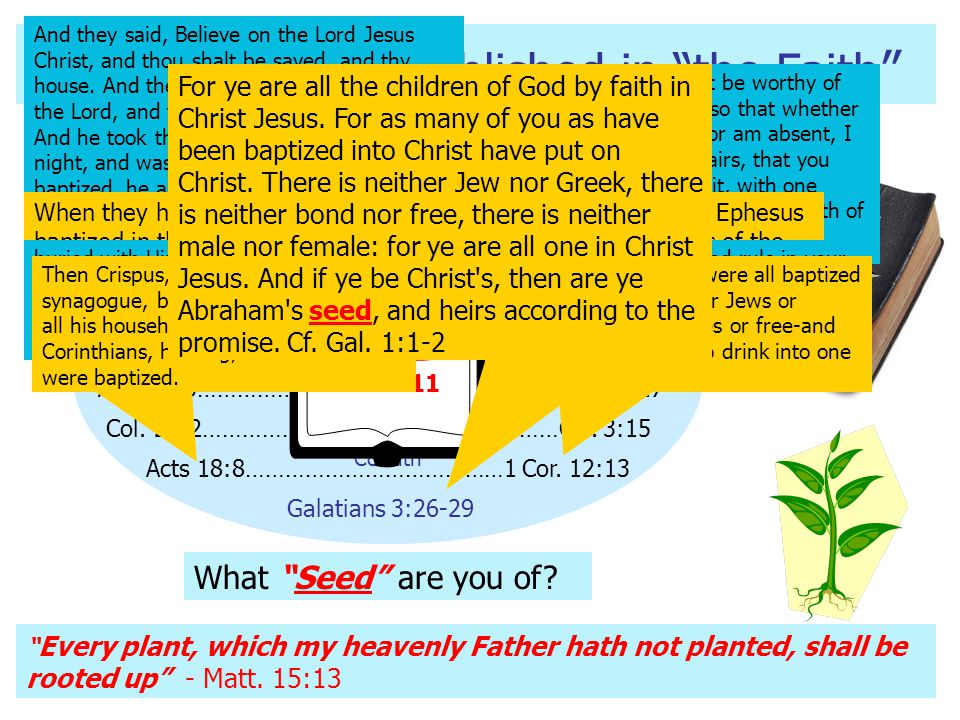 """N.T. Churches Established in """"the Faith """" SEED Acts 2:38………………………………Acts 5:11 Acts 8:12………………………………………Acts 9:31 Acts 16:31-34……………………………………………Phil. 1:"""
