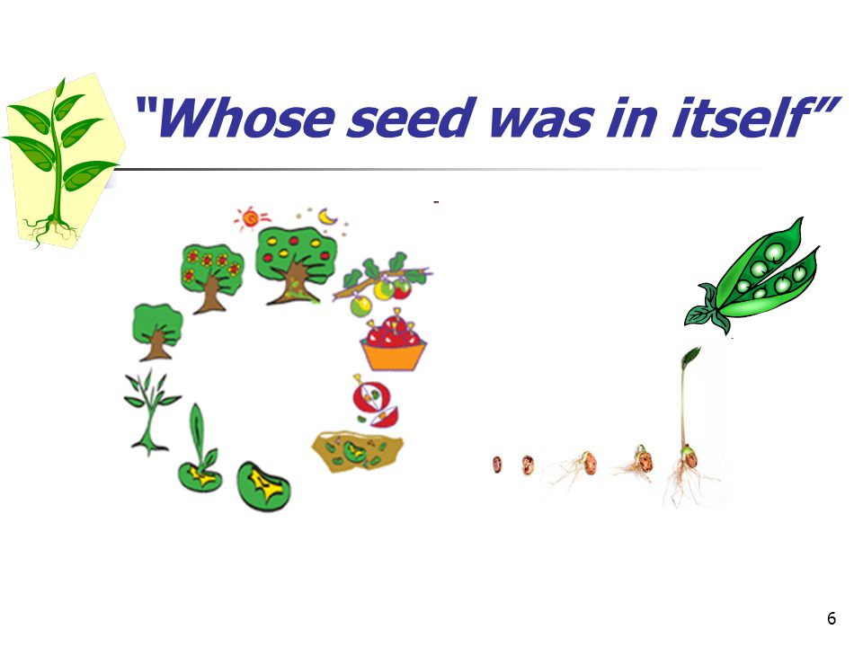 6 Whose seed was in itself