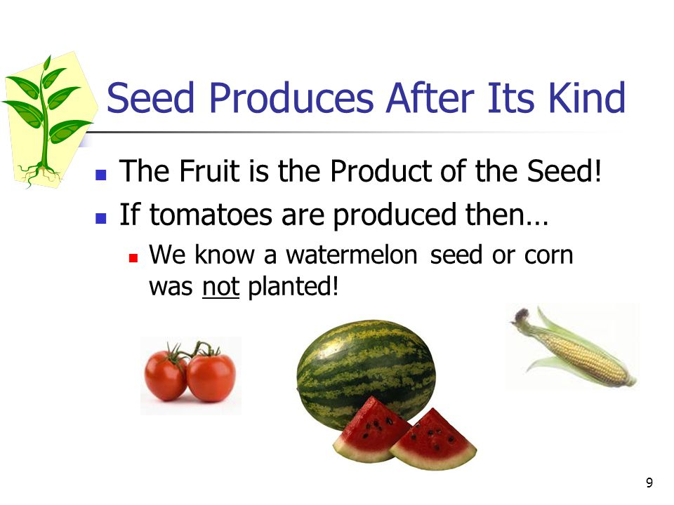 9 Seed Produces After Its Kind The Fruit is the Product of the Seed.