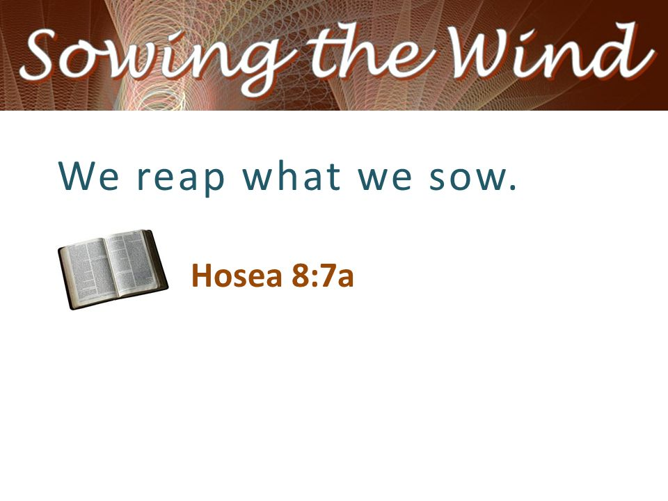 We reap what we sow. Hosea 8:7a