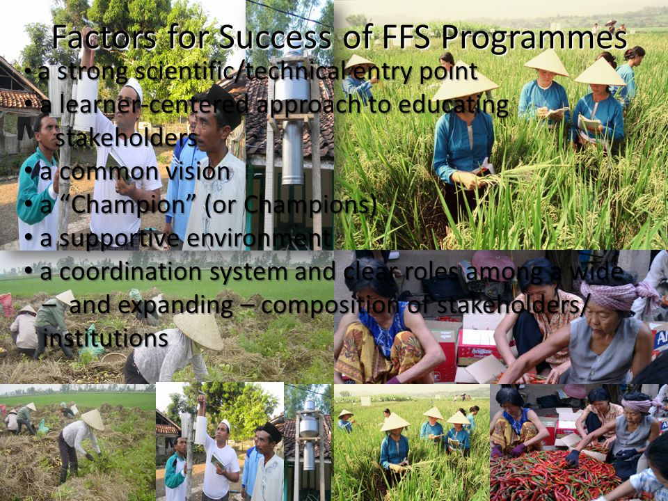 Factors for Success of FFS Programmes a strong scientific/technical entry point a strong scientific/technical entry point a learner-centered approach
