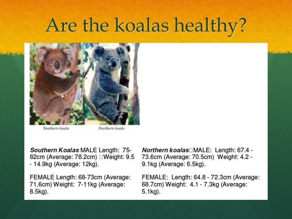 Are the koalas healthy?