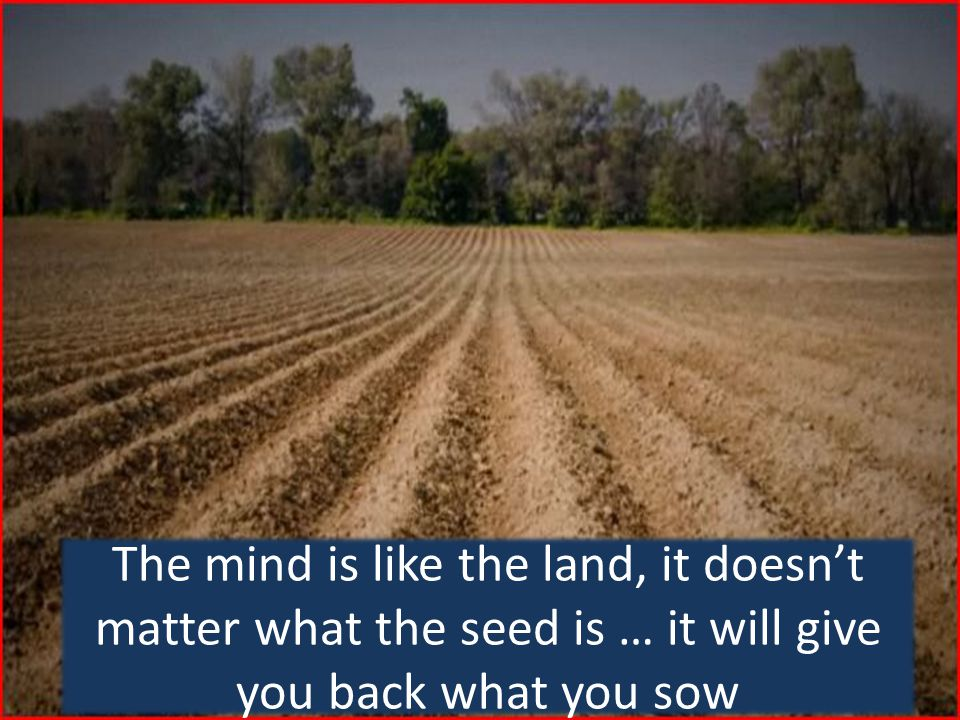 The mind is like the land, it doesn't matter what the seed is … it will give you back what you sow