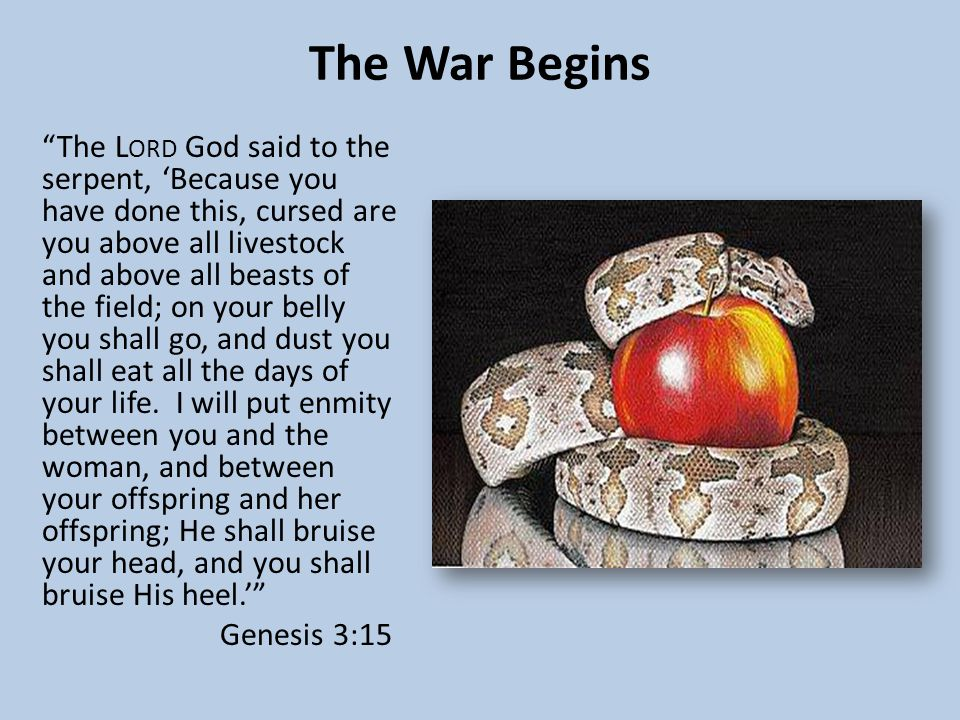 The War Begins The L ORD God said to the serpent, 'Because you have done this, cursed are you above all livestock and above all beasts of the field; on your belly you shall go, and dust you shall eat all the days of your life.