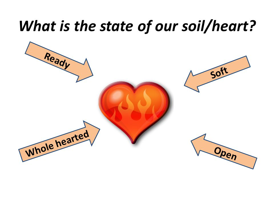 What is the state of our soil/heart? Soft Open Ready Whole hearted