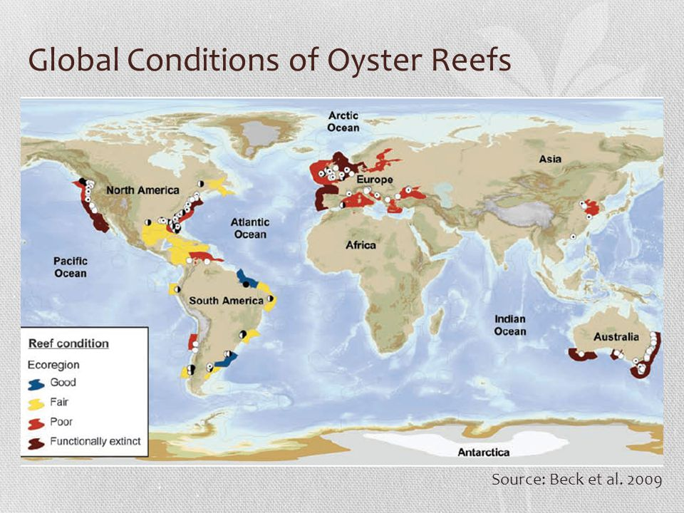 Global Conditions of Oyster Reefs Source: Beck et al. 2009