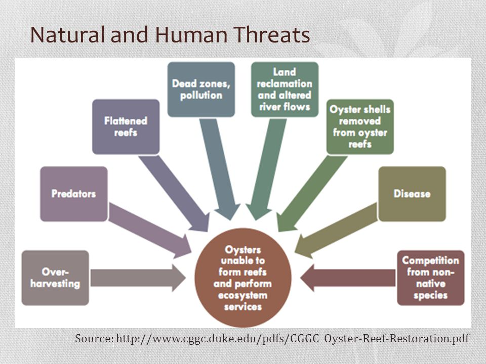 Natural and Human Threats Source: http://www.cggc.duke.edu/pdfs/CGGC_Oyster-Reef-Restoration.pdf