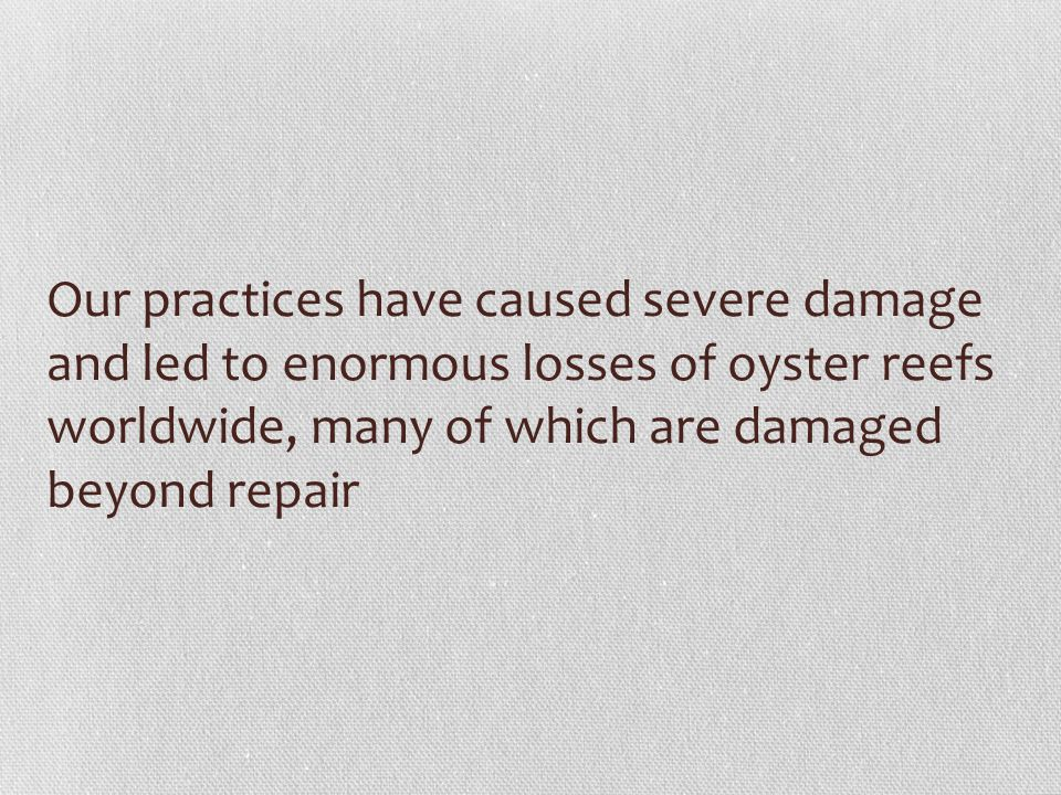 Our practices have caused severe damage and led to enormous losses of oyster reefs worldwide, many of which are damaged beyond repair