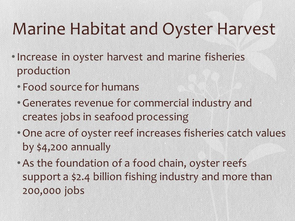 Marine Habitat and Oyster Harvest Increase in oyster harvest and marine fisheries production Food source for humans Generates revenue for commercial industry and creates jobs in seafood processing One acre of oyster reef increases fisheries catch values by $4,200 annually As the foundation of a food chain, oyster reefs support a $2.4 billion fishing industry and more than 200,000 jobs