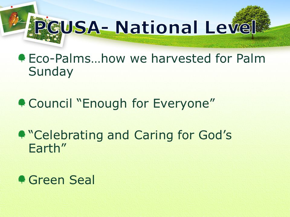 Eco-Palms…how we harvested for Palm Sunday Council Enough for Everyone Celebrating and Caring for God's Earth Green Seal