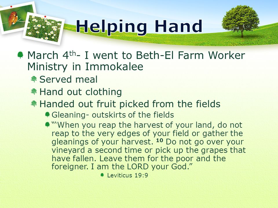 March 4 th - I went to Beth-El Farm Worker Ministry in Immokalee Served meal Hand out clothing Handed out fruit picked from the fields Gleaning- outskirts of the fields 'When you reap the harvest of your land, do not reap to the very edges of your field or gather the gleanings of your harvest.