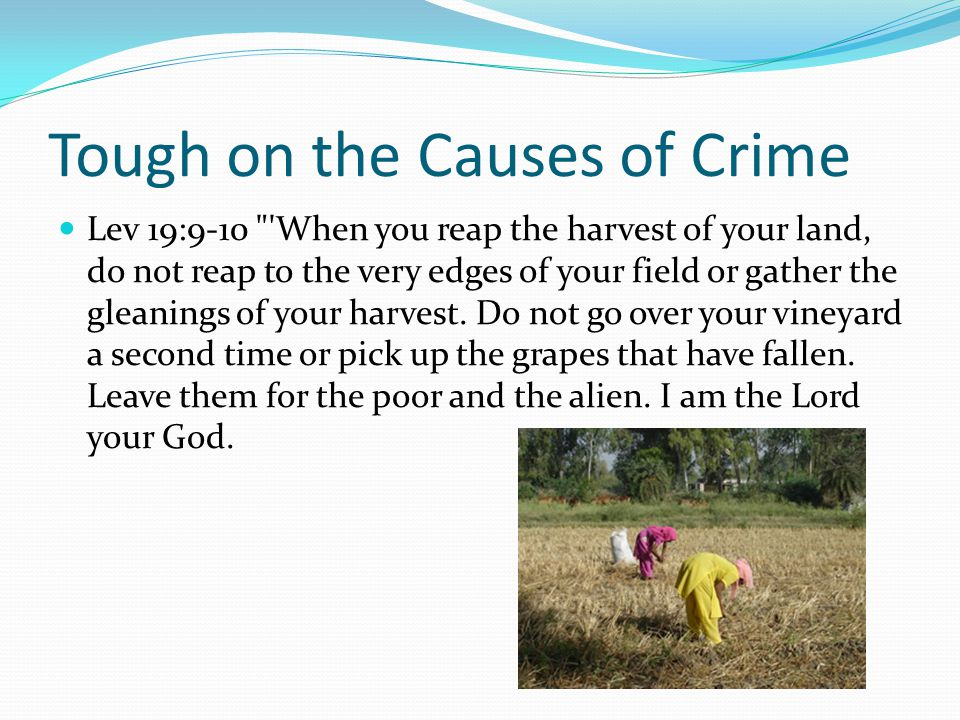 Tough on the Causes of Crime Lev 19:9-10 When you reap the harvest of your land, do not reap to the very edges of your field or gather the gleanings of your harvest.