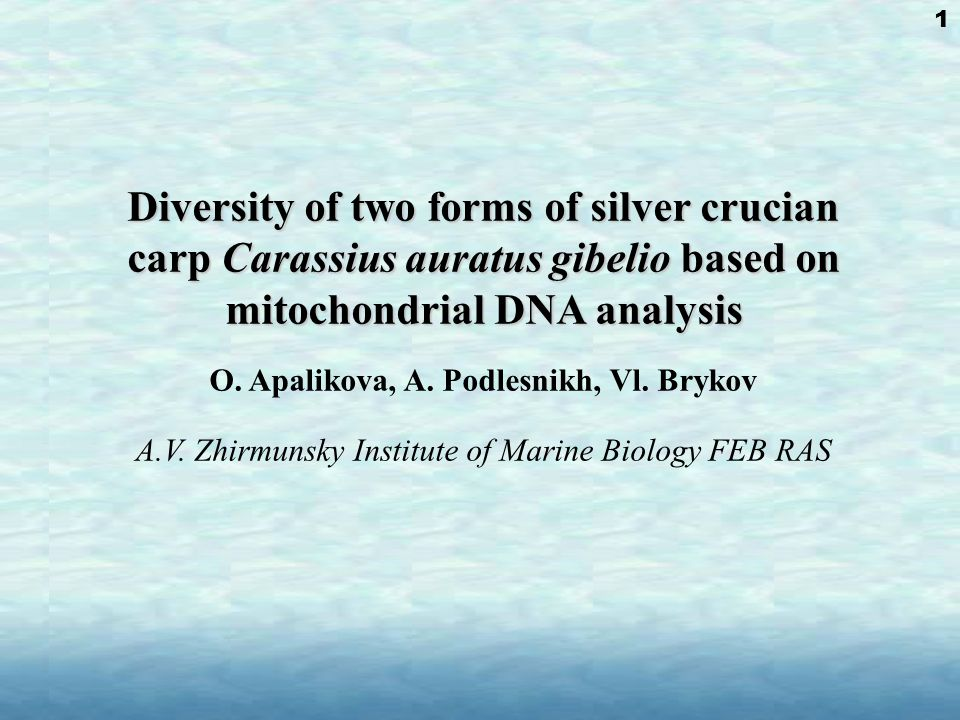 Carassius auratus gibelio (Bloch, 1782) diploid gonochoristic form (2n ≈ 100) gynogenetic polyploid form (3n ≈ 150, 4n ≈ 200) phylogenetic relations of these two forms remain unclear.