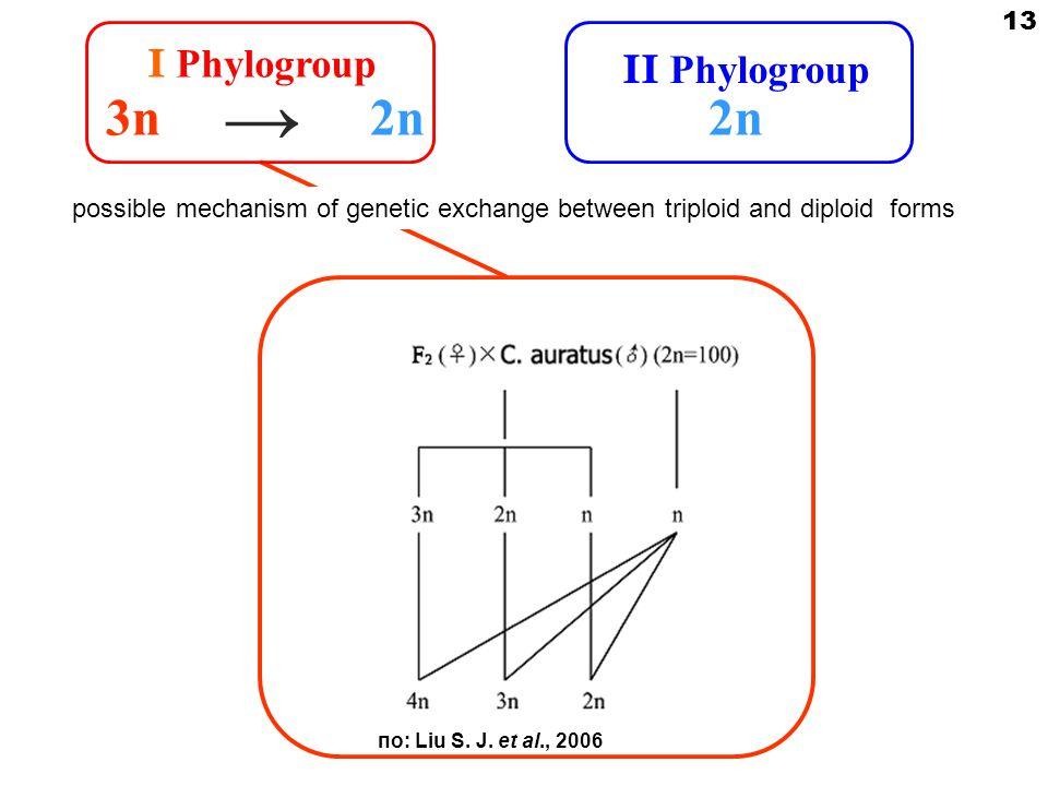 I Phylogroup 3n2n → по: Liu S. J.
