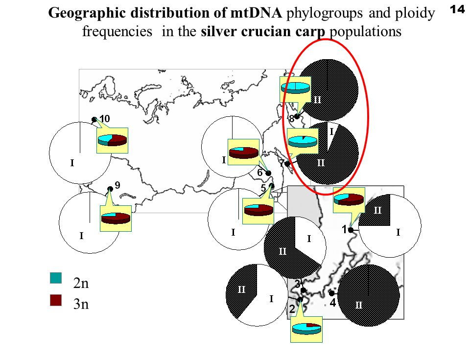 2n2n 3n 14 Geographic distribution of mtDNA phylogroups and ploidy frequencies in the silver crucian carp populations
